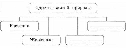 Схема Царства живой природы