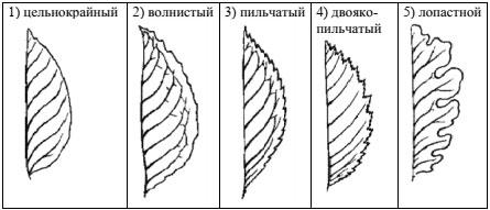 Форма края листа