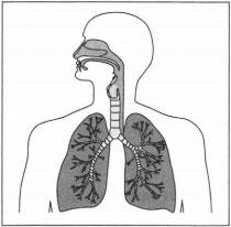 Cистема органов человека