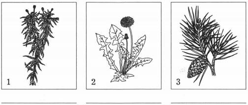 Группы растений 1