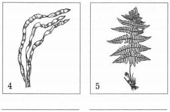 Группы растений 2
