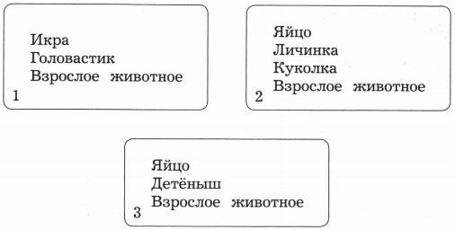 Карточки со стадиями развития животных