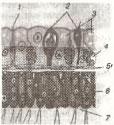 Рисунок Клетки 2 вариант