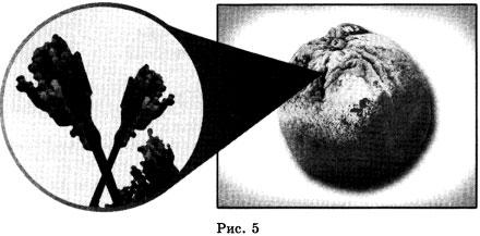 Организм рисунок 5