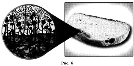 Организм рисунок 6