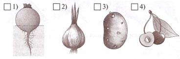 Рисунок к заданию 6 вариант 1