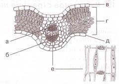 Рисунок к 7 и 8 заданию 1 вариант