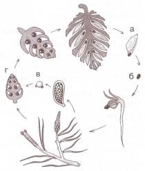 Семя с крылышком