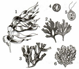 Рисунки с водорослями