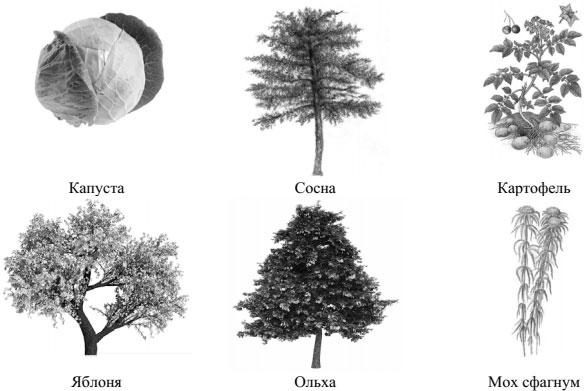 Шесть представителей мира растений